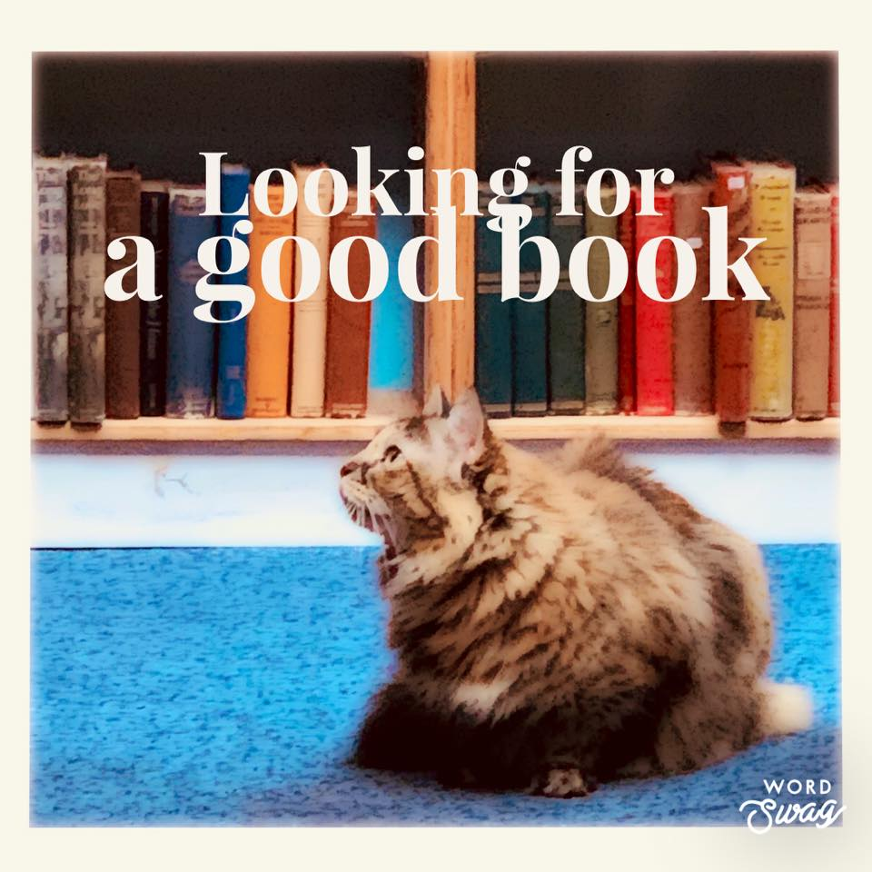 Looking for a good book? with image of a cat surrounded by bookshelves